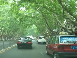 Zhengzhou's tree-lined streets